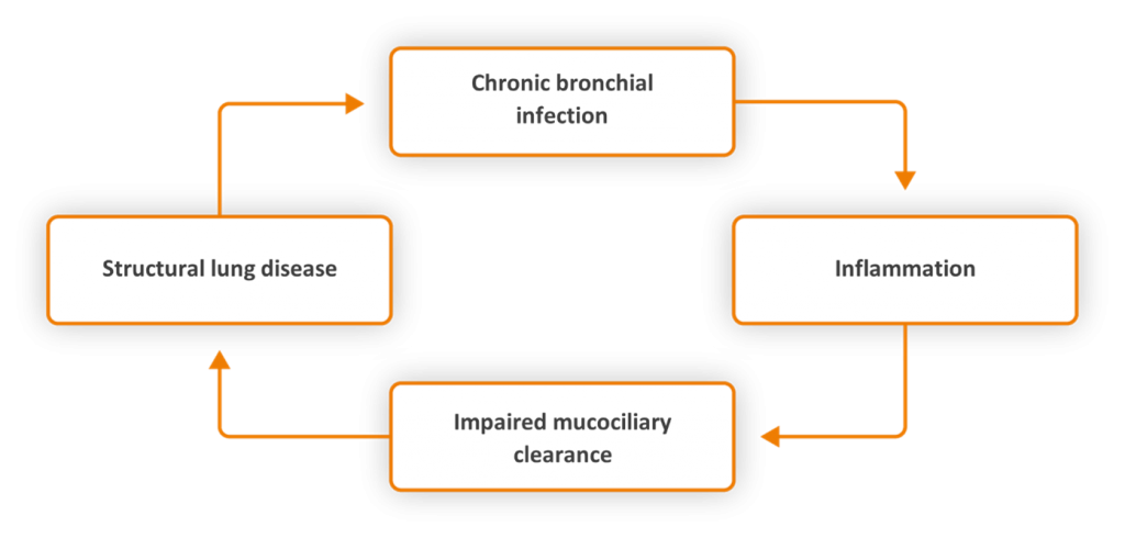 The 'vicious cycle' concept of bronchiectasis